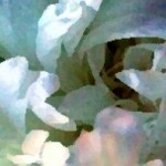 cropped-free-header-art-white-peony-4-watercolor-sunlight-5.jpg