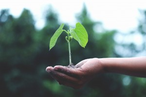 person-holding-a-green-plant-1072824 (1)